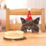 VIDEO: Los mejores videos de gatos para el… ¡Día del gato!