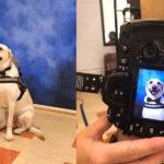 ¡Aww! La tierna foto de un perrito de asistencia que está encantando a las redes